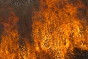 Десять мифов о пожарах на природных территориях