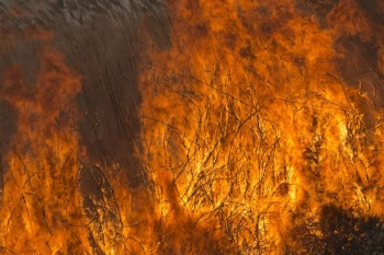 Феникс продолжает помощь пострадавшим от пожаров
