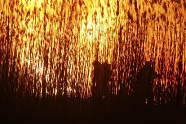 Тростниковые пожары