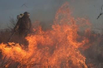 Пожар — слово года